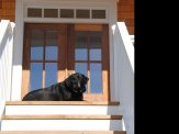 custom home hampstead front porch black dog